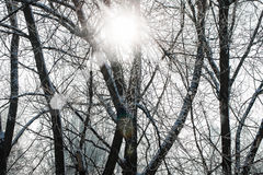 Schneebedeckter Baumwintertag Lizenzfreies Stockbild
