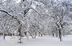 schneebedeckter Hintergrund der Schönheit für Ihre Auslegung stockfotos