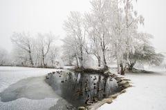 Schneebedeckter Holz- und Waldsee stockbild