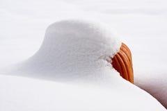 Schneebedeckter Kürbis im Sonnenschein Stockfoto