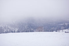 Schneebedeckter Karpatengebirgsnebeliger Wintermorgen ukraine Lizenzfreie Stockfotos