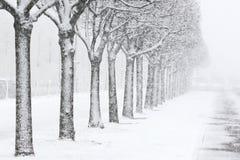 Schneebedeckter Park im St. Petersburg. Russland. Lizenzfreie Stockfotografie