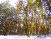 Schneebedeckter Tag des Winters im Wald Lizenzfreies Stockbild
