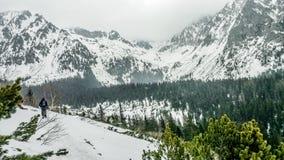 schneebedeckter Tag stockfotos