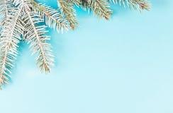 Schneebedeckter Tannenzweig auf blauem Hintergrund Stockbilder