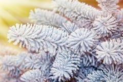 Schneebedeckter Tannenzweig, belichtet durch die Sonne Lizenzfreie Stockfotografie