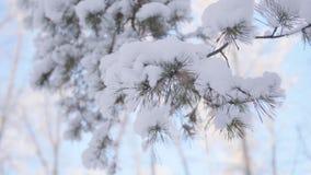 Schneebedeckter Tannenzweig in Winter Park auf einem Hintergrund des blauen Himmels Lizenzfreie Stockbilder