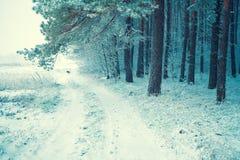 schneebedeckter Wald der Kiefer Stockfoto