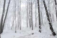 Schneebedeckter Wald des Weihnachtsmysteriösen Winters Lizenzfreie Stockbilder