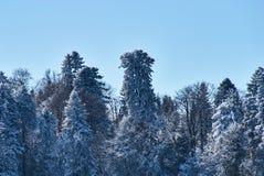 Schneebedeckter Wald des Winters auf einem Hintergrund des sauberen blauen Himmels Lago-Naki, der Hauptkaukasier Ridge, Russland stockfoto