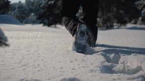 Schneebedeckter Wald des Winters bei Sonnenuntergang Sch?ner Kiefernwald im Schnee stock video footage