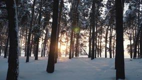 Schneebedeckter Wald des Winters bei Sonnenuntergang Sch?ner Kiefernwald im Schnee stock footage