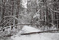 Schneebedeckter Wald des Winters der gefallene Baum blockierte die Straße Stockfotos