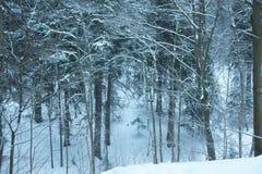 Schneebedeckter Wald des Winters mit Stämmen und Niederlassungen und ein Weihnachtsbaum in der Mitte, fotografiert von einem Hüge lizenzfreie stockfotos