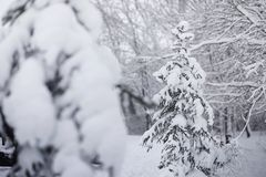 Schneebedeckter Winterpark und -bänke Park und Pier für die Fütterung Lizenzfreie Stockfotografie