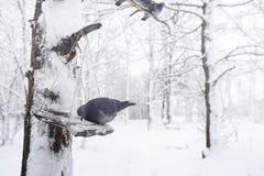 Schneebedeckter Winterpark und -bänke Park und Pier für die Fütterung Stockfoto