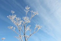 Schneebedecktes Blatt gegen den blauen Himmel Lizenzfreie Stockfotografie
