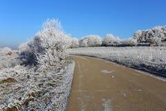 Schneebedecktes eisiges des Winters Stockfoto
