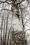 Schneebeschaffenheit auf einem Baumstamm in der Winterlandschaft Stockbild