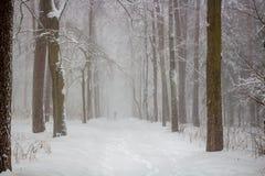 Schneeblizzard im Park im Winter, schlechte Sicht stockbild