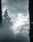 Schneeblizzard im Wald hergestellt durch Schneegenerator lizenzfreie stockfotografie