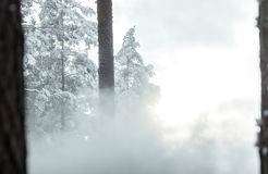 Schneeblizzard im Wald hergestellt durch Schneegenerator stockbild