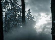 Schneeblizzard im Wald hergestellt durch Schneegenerator Stockfotos