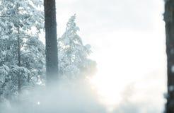 Schneeblizzard im Wald hergestellt durch Schneegenerator lizenzfreies stockfoto