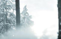 Schneeblizzard im Wald hergestellt durch Schneegenerator stockbilder
