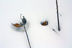 Schneedetails Stockfotos