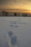 Schneedrucke Stockfotos