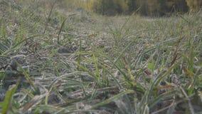 Schneeeis auf Nahaufnahmedetails des grünen Grases stock footage