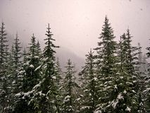 Schneefälle 1 Stockbild
