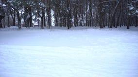 Schneefälle in der Waldwinterzeit stock footage
