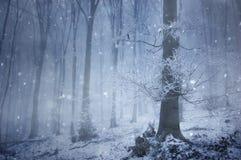 Schneefälle in einem magischen Wald mit einem sehr großen alten Baum Lizenzfreies Stockfoto