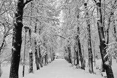 Schneefälle im Park Stockbild