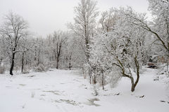 Schneefälle im Park Stockfotografie