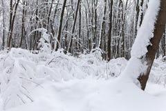 Schneefälle im Park, Schnee umfassten Baumlandschaft Schönes Winterwetterkonzept Stockfotos