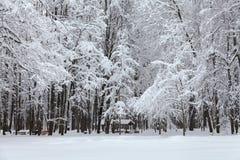 Schneefälle im Park, Schnee umfassten Baumlandschaft Schönes Winterwetterkonzept Stockfotografie