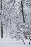Schneefälle im Park, Winterwetterszene, Schnee umfassten Baumlandschaft Konzept des schlechten Wetters Selektiver Fokus zu Stockbilder