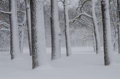 Schneefälle im Wald Stockfotos