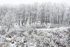 Schneefälle im Wald Stockbild