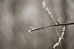 Schneefälle im Wald Stockfoto