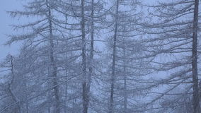 Schneefälle im Wald stock video footage