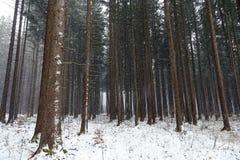 Schneefälle im Wald im Winter Lizenzfreie Stockfotografie
