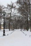 Schneefälle im Winterpark Lizenzfreie Stockfotografie