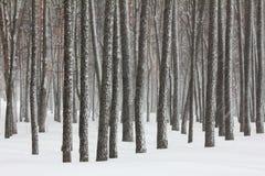 Schneefälle im Winterwald Lizenzfreies Stockfoto