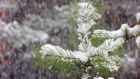 Schneefälle im Winterwald stock video footage