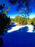 Schneefeld und -natur Lizenzfreie Stockfotografie