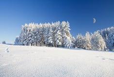 Schneefeld und -wald unter blauem Himmel mit Halbmond Stockfoto